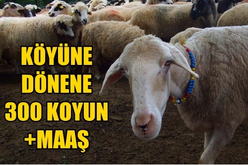 Kentten Köye Dönüşe Koyunlu Teşvik