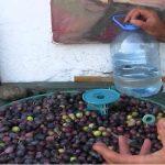 Evde Zeytin Kırma-Dilme İşi
